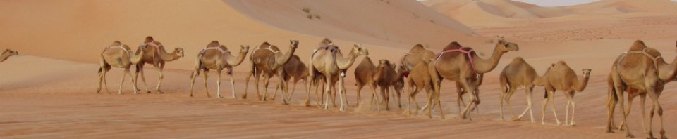 Rub Alkhali Desert Tourism L.L.C