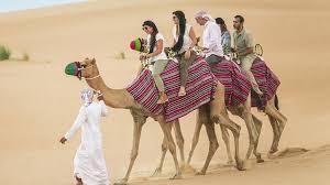 Camel rides Abu Dhabi
