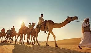 Camel trekking auh