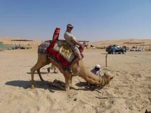 Camel rides in Abu Dhabi